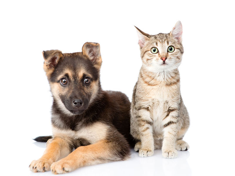 昕锐社:到 2028 年,全球宠物电子商务市场预计将达到 500亿美元
